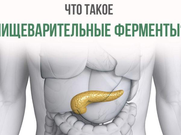 Что такое пищеварительные ферменты?